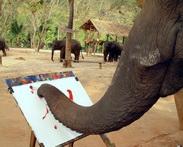 Art by Elephant
