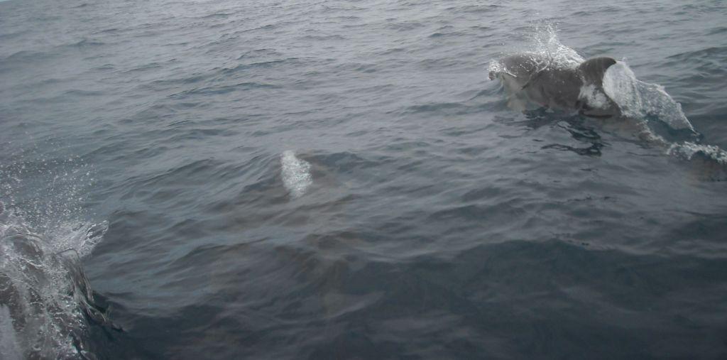 dolphinJamie1