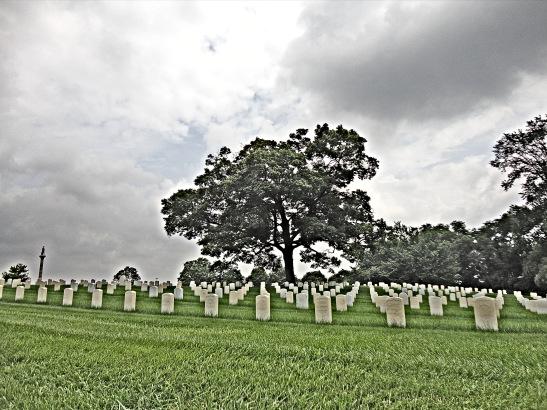 The Silent Fallen