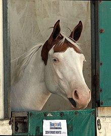 alert horse