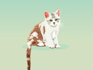 cat-3622097